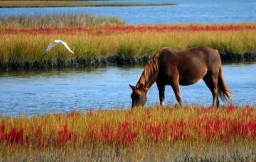 metafora cavallo psicoterapia roma